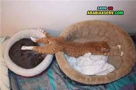 حبايبي القطط Images?q=tbn:ANd9GcR41zOytdJjmfPMLHNwxtwmKSNyhrDNJ3SIfcZ79GsBAzsA5rU-0Q