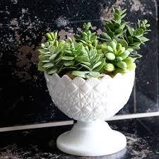 Succulents Pots For Sale by Download Succulent Planters For Sale Buybrinkhomes Com