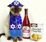 Passover cat