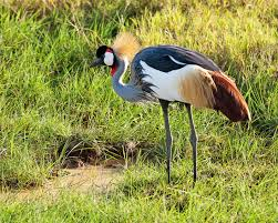 tanzania wilderness inquiry