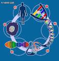 <b>Genetica de Poblaciones</b>