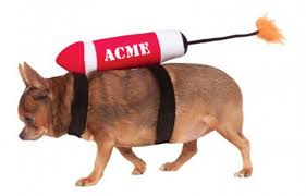collection halloween pet costumes pictures top 20 best cute dog