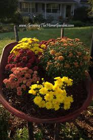 Fall Landscaping Ideas by 112 Best Wheelbarrow Gardens Images On Pinterest Wheelbarrow