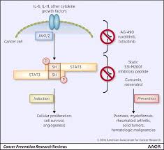 targeting inflammation in cancer prevention and therapy cancer