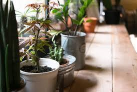 want to breathe easier indoors get these houseplants mental floss