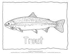 trout coloring collectionfrom wonderweirded fish coloring