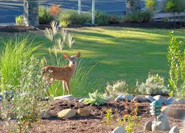 How To Keep Deer Out Of Vegetable Garden by Reclaim Your Garden How To Protect Your Plants From Deer