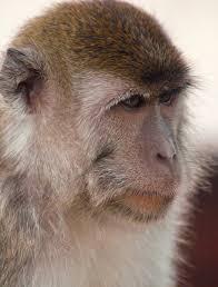 indianapolis zoo indianapoliszoo twitter