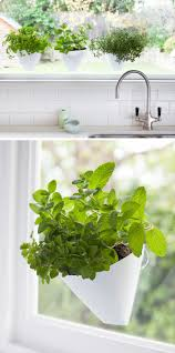 indoor garden idea hang your plants from the ceiling u0026 walls