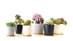 Succulents Pots For Sale by Care Tips Of Succulents How Ornament My Eden