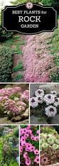 Small Rock Garden Pictures by Best 25 Rock Garden Design Ideas On Pinterest Yard Design