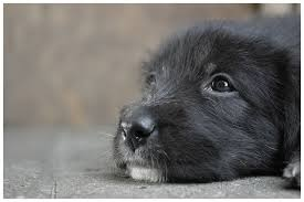 Diego [10] - Bild \u0026amp; Foto von Sascha Rettkowski aus Hunde ... - 6688034
