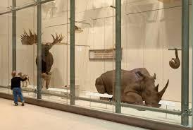 si nmnh centennial roosevelt rhinoceros