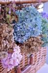 Hydrangea - My Favorite Flower - Slipcovered Grey