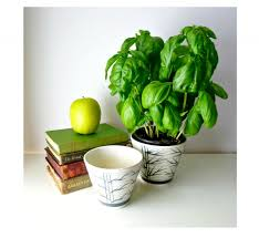 beautiful small house plants arts