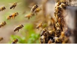Почему улетел рой пчел?
