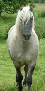 Un berceau sur un cheval de Evelyne Coquet Images?q=tbn:ANd9GcR9NqTcyuD2haoIi-LeUXx7hmZmkaSsg2icyAxDb0ngilDBexgcdQ