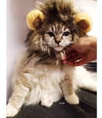 Kitten Costumes Halloween Halloween Costumes Cats Fluffy Kitty