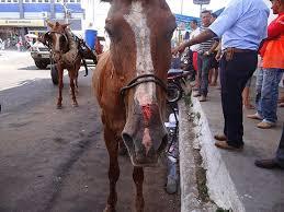 Prefeitura do Recife (PE) procura área rural para animais vítimas de ...
