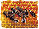 Βιβλία :: Μελισσοκομία χωρίς δάσκαλο - ONLINE PETSHOP στην Ελλάδα ...