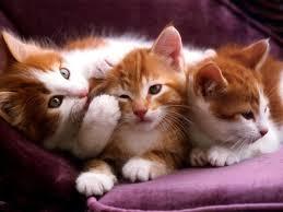 ¿Qué son los gatos?