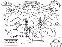 blog tree care tips