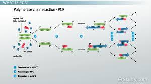 Resume Definition Taq Polymerase Definition U0026 Function Video U0026 Lesson Transcript