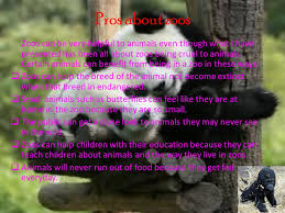 Should Animals Be Kept in Zoos  Do Now U zoo Vice