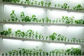 hydroponics for small apartments garden culture magazine