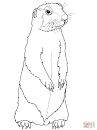 marmot coloring page free printable coloring pages