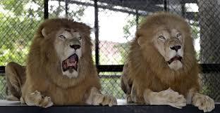 lions bears thanksgiving r nfl roast of the detroit lions 19 32 nfl