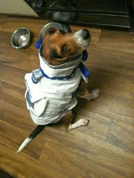 life with beagle need a halloween costume for your pet check out