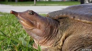 BBC Brasil - Vídeos e Fotos - Tartaruga que urina pela boca ...