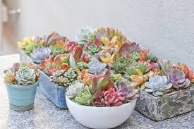 Succulents Pots For Sale by Succulent Collection I Dream Of Succuentsi Dream Of Succuents