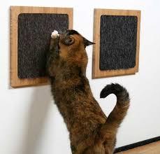 مستلزمات القطط !! Images?q=tbn:ANd9GcRFrOIT2RhGKJYWraOOGFlbBYB6LsNm3NfJrJLwrnQOkbUP0IMN7A