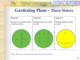 companion planting the real story montgomery county master gardene u2026