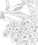Free Printable Coloring Page...Iowa State Bird and Flower, Eastern ... friendsacrossamerica.com