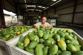 Without G M O   there would be no papaya in Hawaii     said Eric Weinert  general manager of Hawaii operations for Calavo Growers  a papaya packer  The New York Times