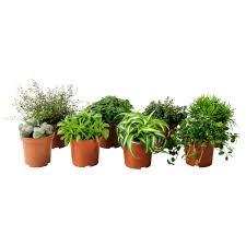 Succulents Pots For Sale succulents u0026 plants ikea