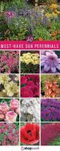 best 25 perennial gardens ideas on pinterest perennials summer