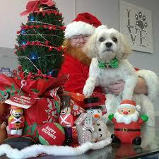 the canine showcase