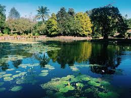 Brisbane City Botanic Gardens by A Visit To Brisbane U0027s Mt Coot Tha Botanic Gardens U2022 The Wanderbug