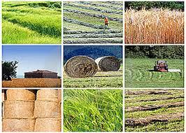 32 طرح کشاورزی همزمان با دهه فجر در استان به بهره برداری می رسد