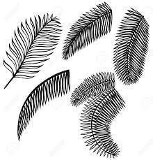 palmier dessin ensemble de feuilles de palmier isolé sur fond
