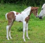 Hollylandstud.co.uk - Mares and foals