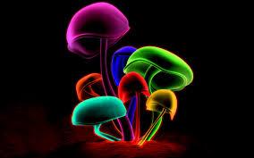 Mushroom Home Decor Mushrooms Wallpaper 809168 Colorful Clipgoo