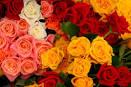 ความหมายของดอกกุหลาบ สี