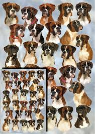 boxer dog uk waggy dogz 17