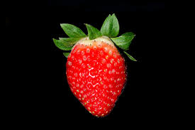 What Is Flower Food by Strawberry Wikipedia