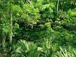 Blue Spring State Park Florida